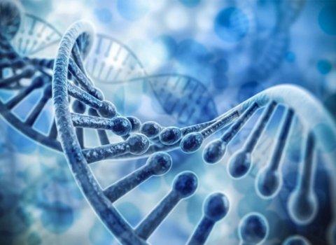新型人造细胞有望感知肿瘤标志物