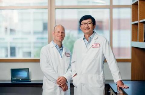 哈佛科学家找到保护胰岛β细胞的新方法